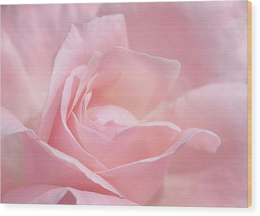A Delicate Pink Rose Wood Print