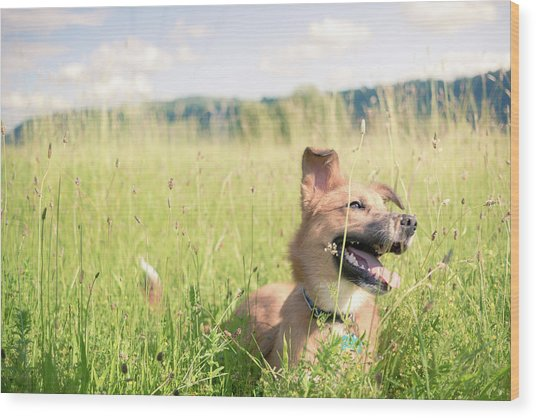 Wood Print featuring the photograph A Dog In The Park by Nicole Young