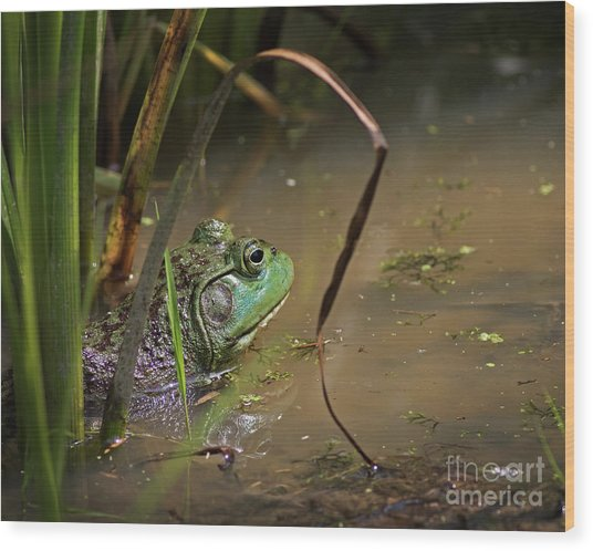 A Frog Waits Wood Print