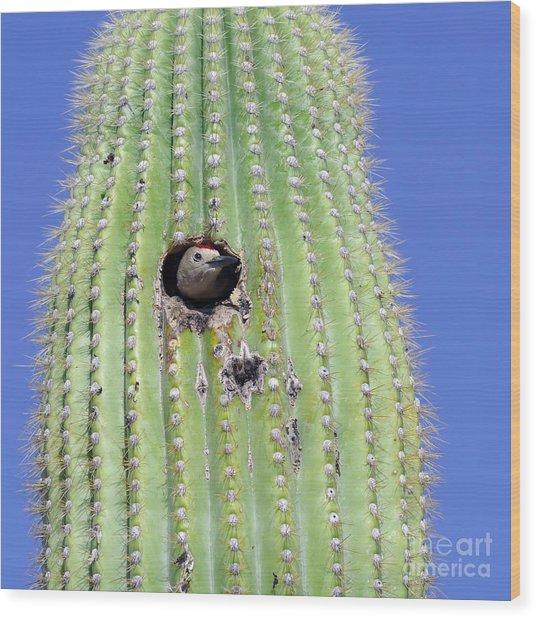A Gila Woodpecker Sticking Its Head Out Wood Print