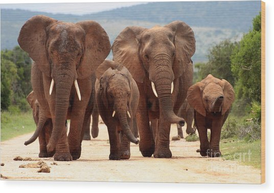 A Herd Of Elephant Walk Towards The Wood Print