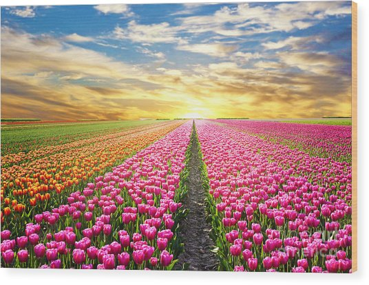 A Magical Landscape With Sunrise Over Wood Print