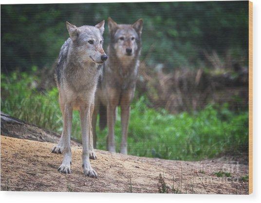 A Pair Of Mackenzie Valley Wolves Wood Print