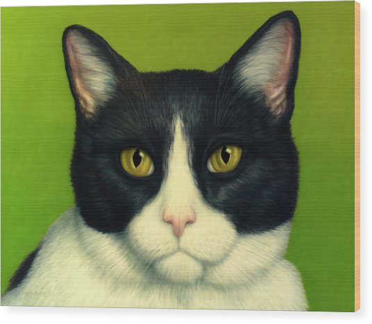 A Serious Cat Wood Print