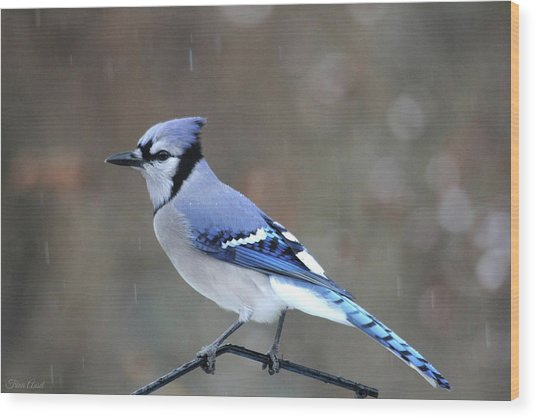 A Snowy Day With Blue Jay Wood Print