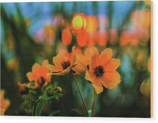 Sunflower Bokeh Sunset Wood Print