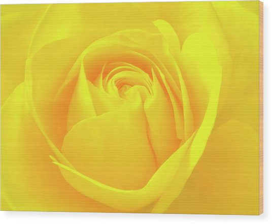 A Yellow Rose For Joy And Happiness Wood Print