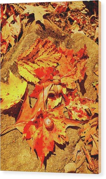 Acorns Fall Maple Oak Leaves Wood Print