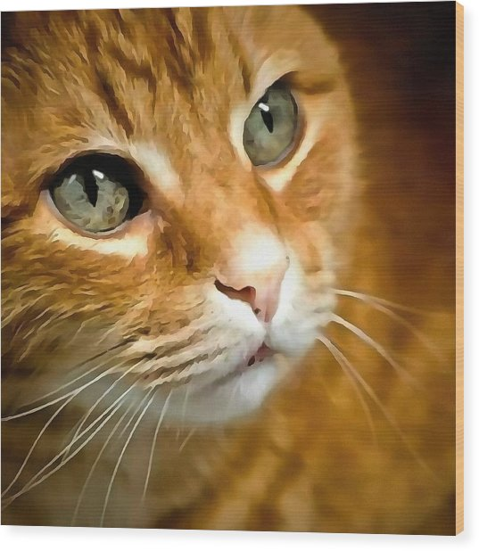 Adorable Ginger Tabby Cat Posing Wood Print