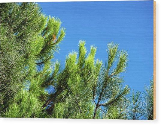 Adriatic Pine Against Blue Sky  Wood Print