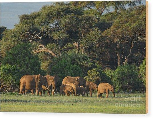 African Bush Elephant - Loxodonta Wood Print