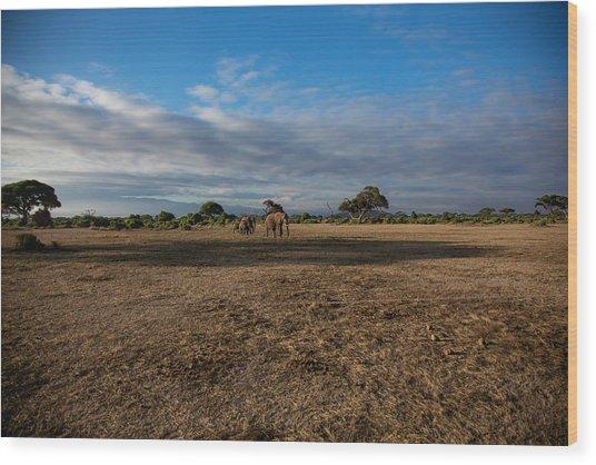 Amboseli Wood Print