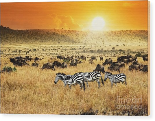 African Landscape. Zebras Herd And Wood Print
