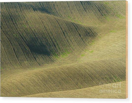 Agricultural Field Landscape  Wood Print