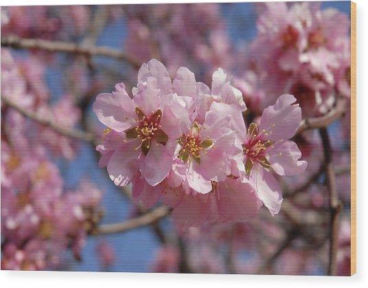 Almond Blossom. Spain Wood Print by Josie Elias
