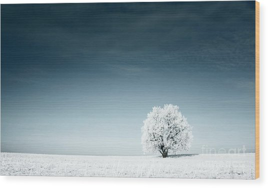 Alone Frozen Tree In Snowy Field And Wood Print