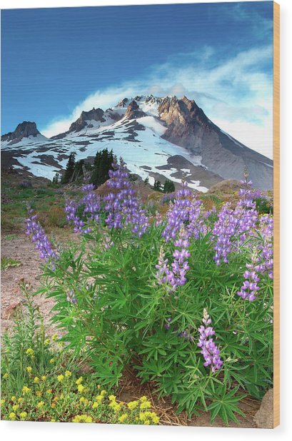 Alpenglow On Flowers And Mt. Hood Wood Print