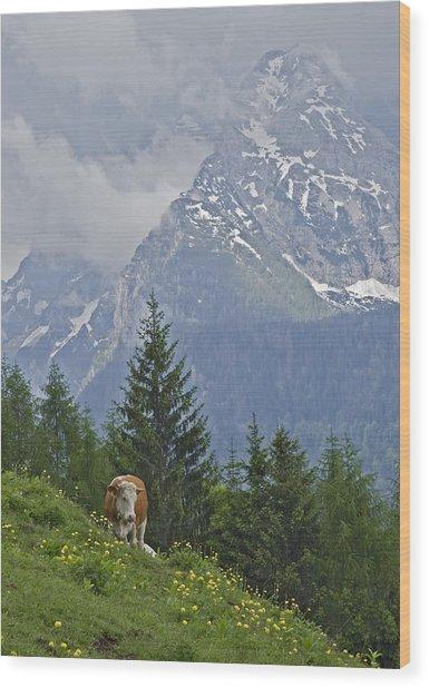 Alpine Cow Wood Print