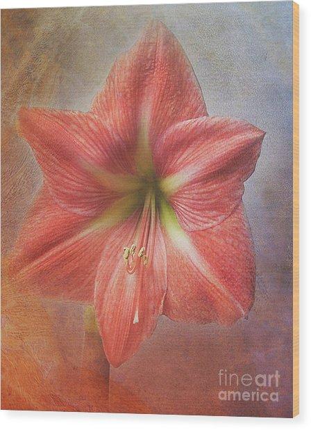 Amaryllis 'terra Cotta Star' Wood Print