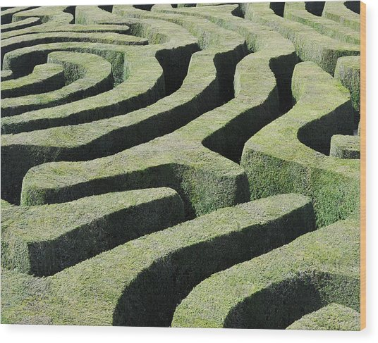Amazing Maze Wood Print by Oversnap