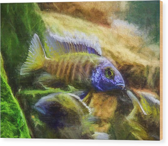 Amazing Peacock Cichlid Wood Print