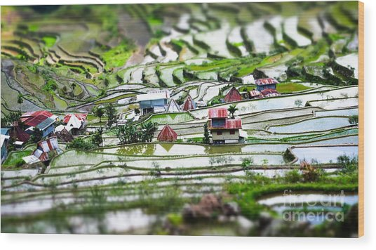 Amazing Tilt Shift Effect View Of Rice Wood Print