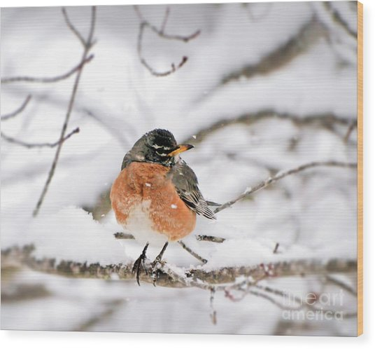American Robin In The Snow Wood Print