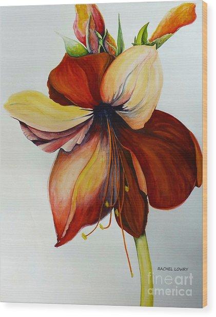 Amerylis/amaryllis  Wood Print