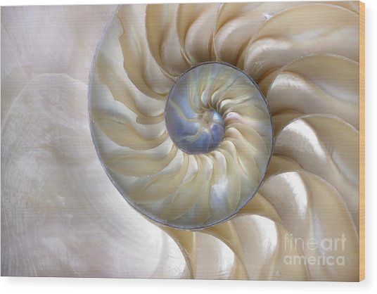 An Amazing Fibonacci Pattern In A Wood Print by Tramont ana