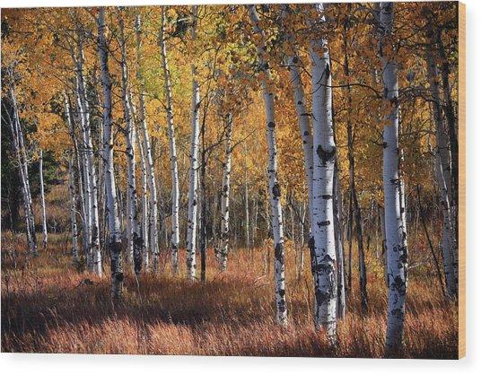 An Aspen Grove In Autumn With Orange Wood Print
