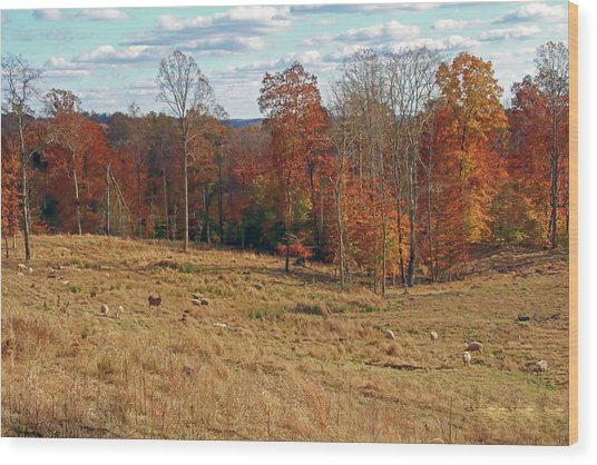 Wood Print featuring the photograph Animals Grazing On A Fall Day by Angela Murdock