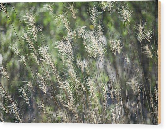 Annadel_grasses_548_18 Wood Print