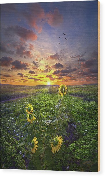 Wood Print featuring the photograph Any Time At All by Phil Koch