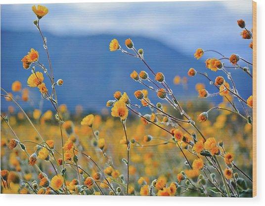Anza Borrego Wild Desert Sunflowers Wood Print