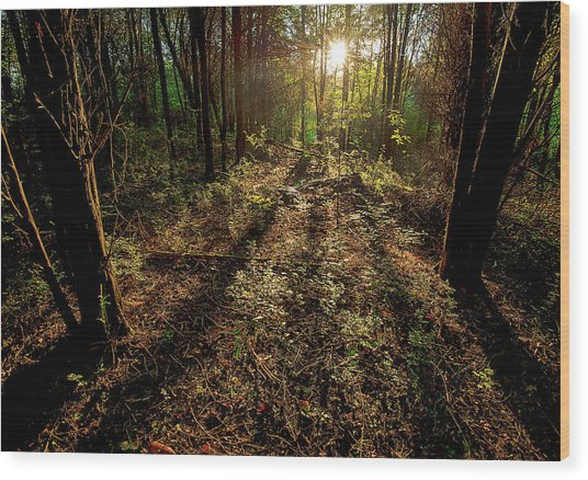 Appalachia Morning Wood Print