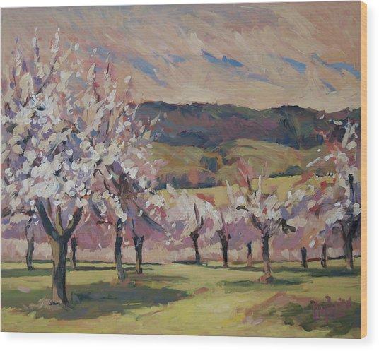 Apple Blossom Geuldal Wood Print
