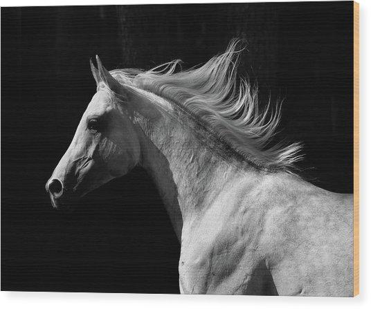 Arab Stallion Wood Print by Photographs By Maria Itina