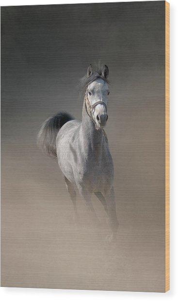 Arabian Horse Running Through Dust Wood Print by Christiana Stawski