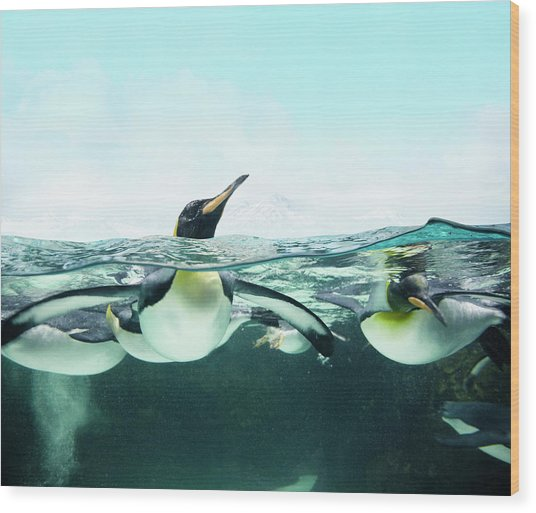 Arctic Penguins Wood Print