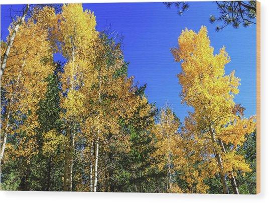 Arizona Aspens In Fall 1 Wood Print