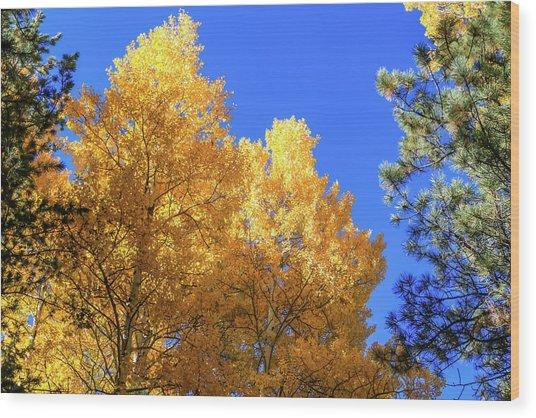 Arizona Aspens In Fall 2 Wood Print