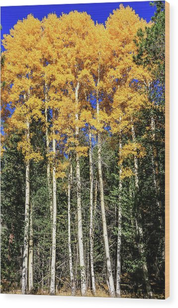 Arizona Aspens In Fall 3 Wood Print