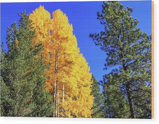 Arizona Aspens In Fall 4 Wood Print