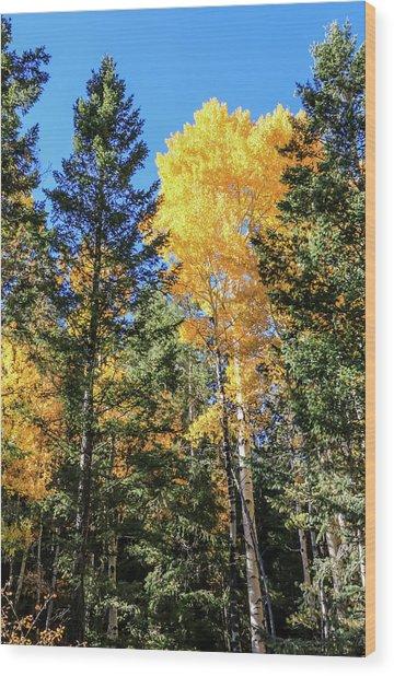 Arizona Aspens In Fall 5 Wood Print