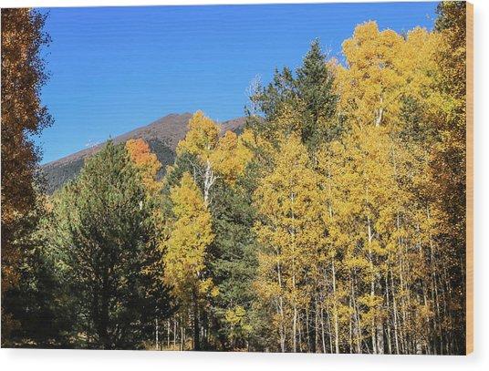 Arizona Aspens With Mountains Wood Print