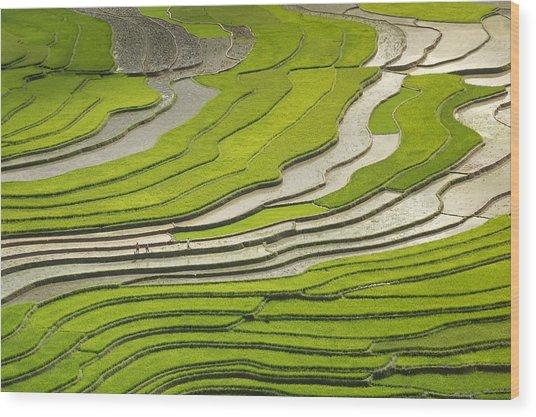 Asian Rice Field Wood Print