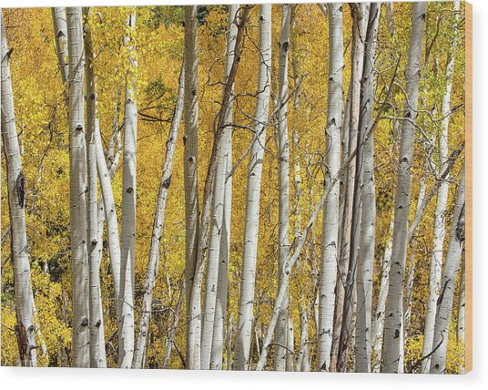 Aspen Autumn Wood Print