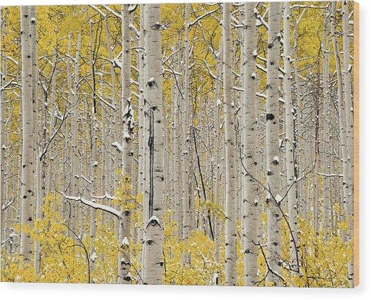 Aspen Forest In Autumn Wood Print by Leland D Howard