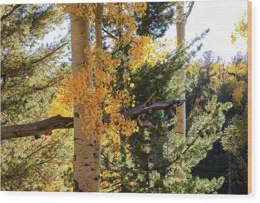 Aspen Tree Close Wood Print
