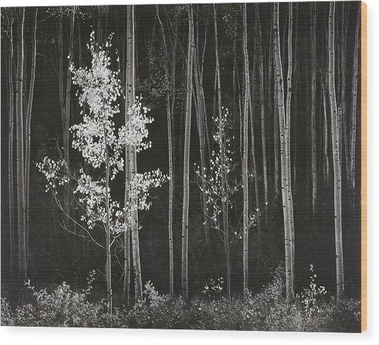 Aspens Northern New Mexico Wood Print